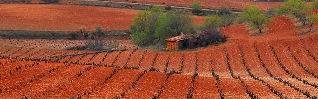 wineries and vineyards do Cariñena