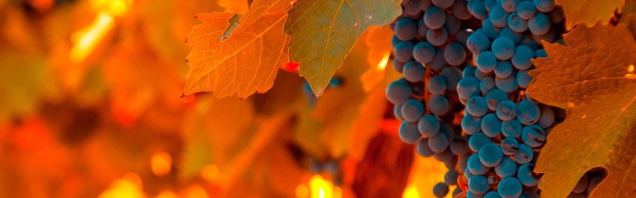 wineries for sale do jumilla