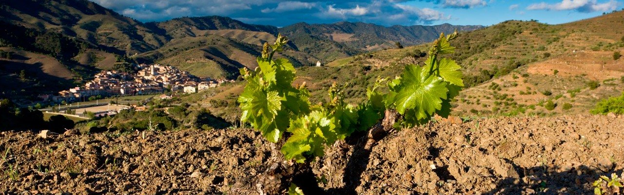 wineries for sale do montsant