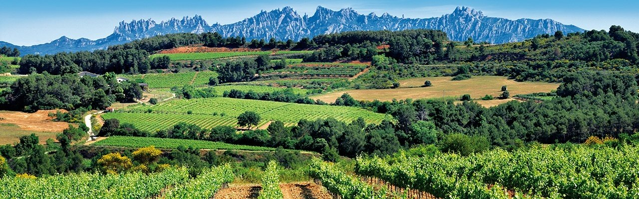 wineries do penedes