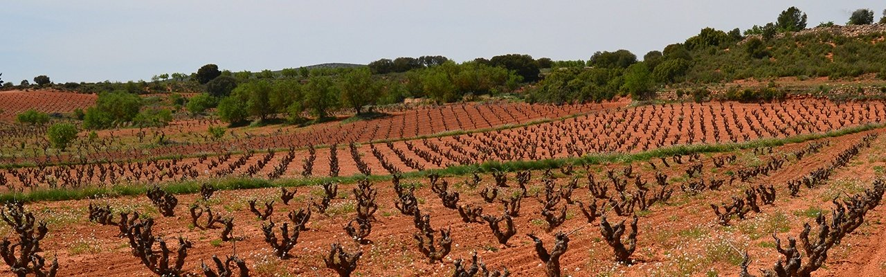 vineyards for sale do utiel-requena