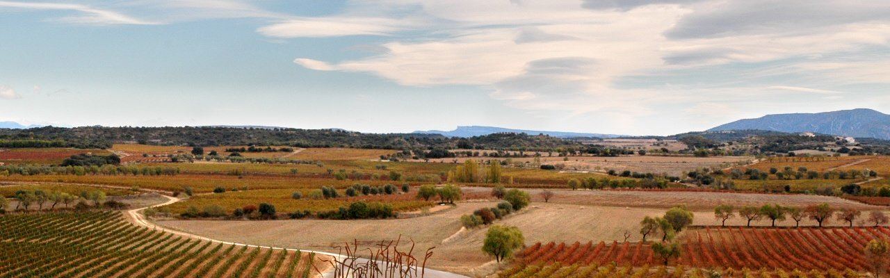 wineries for sale do campo de borja