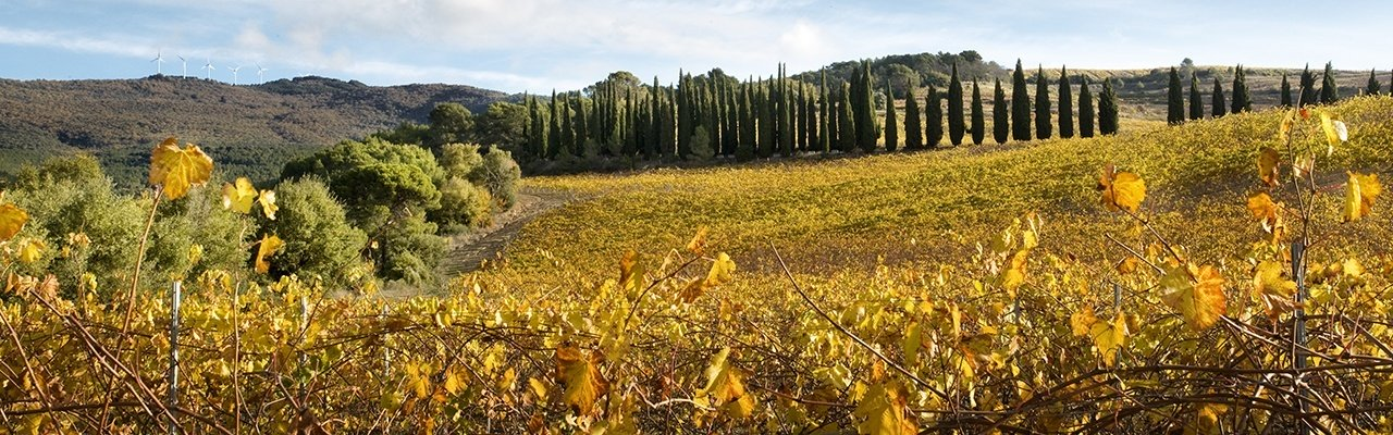 wineries for sale do navarra