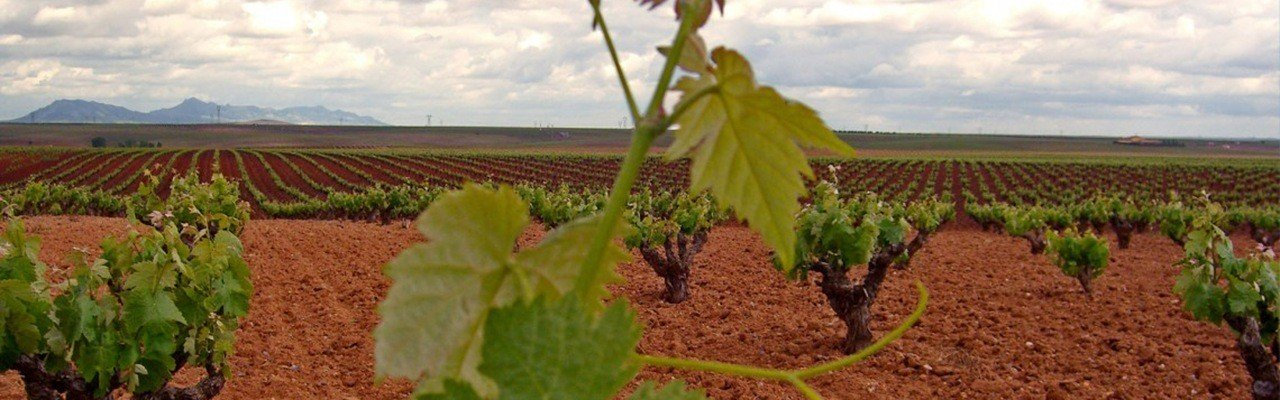 wineries wine products ribera del guadiana