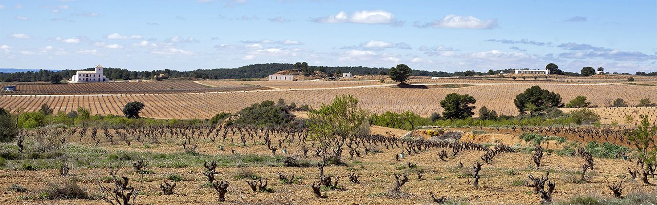 wineries do valencia