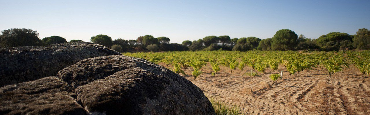 vineyards for sale do vinos de madrid