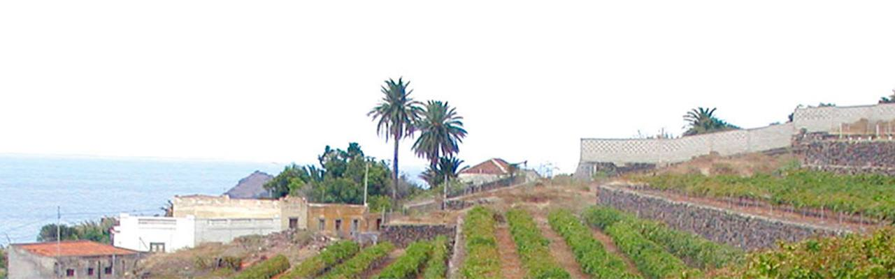 vineyards for sale do ycoden-daute-isora