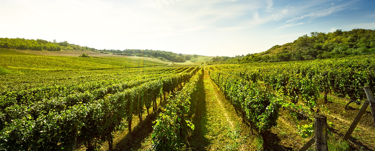 Wineries and vineyards for sale in Spain