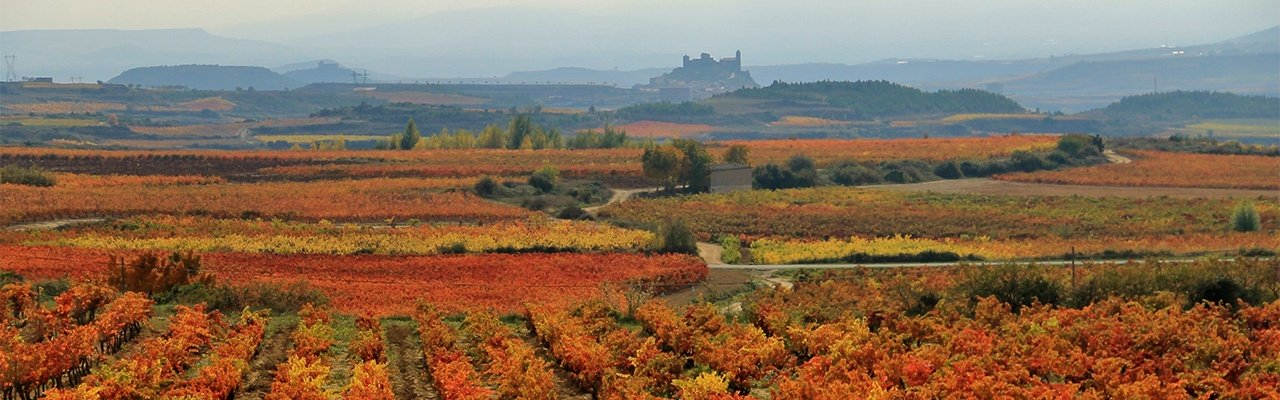 wineries for sale rioja