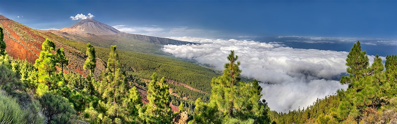 wineries for sale tenerife