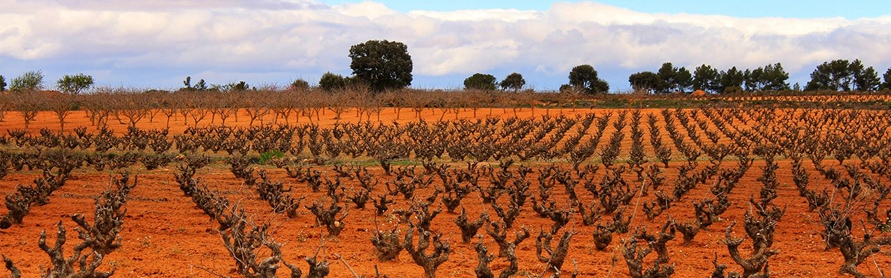 wineries and vineyards for sale albacete