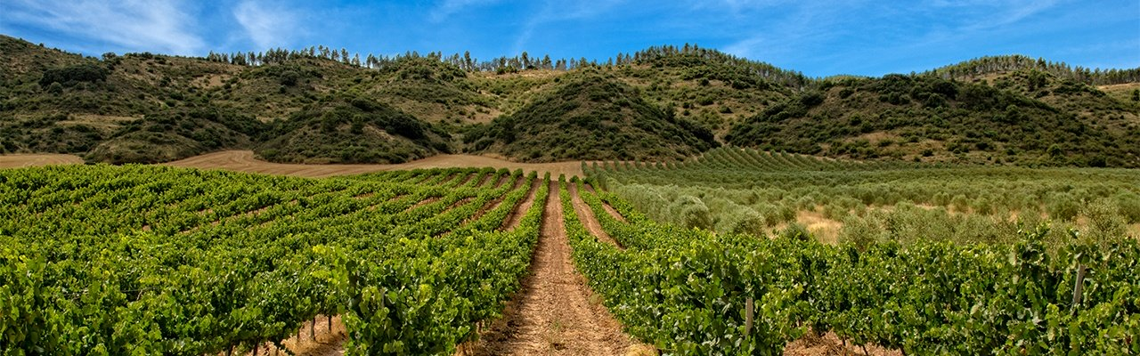 wineries from rioja