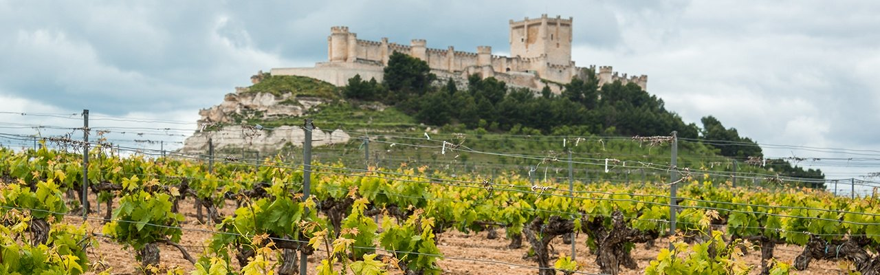 wineries with vineyards in valladolid