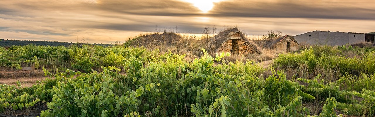 wineries and vineyards in zamora